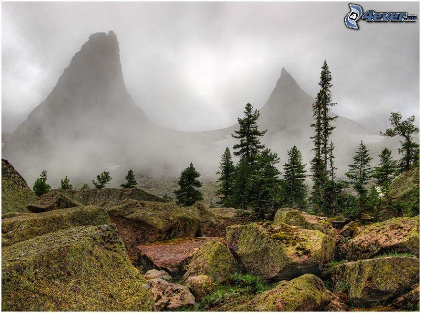 rocas, montañas, árboles coníferos, niebla