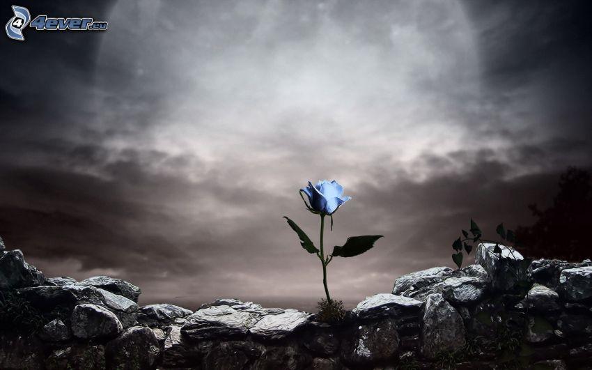 rosa azul, piedras, cielo oscuro