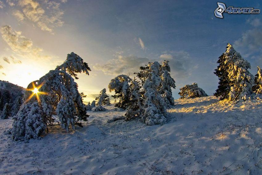 salida del sol, árboles nevados
