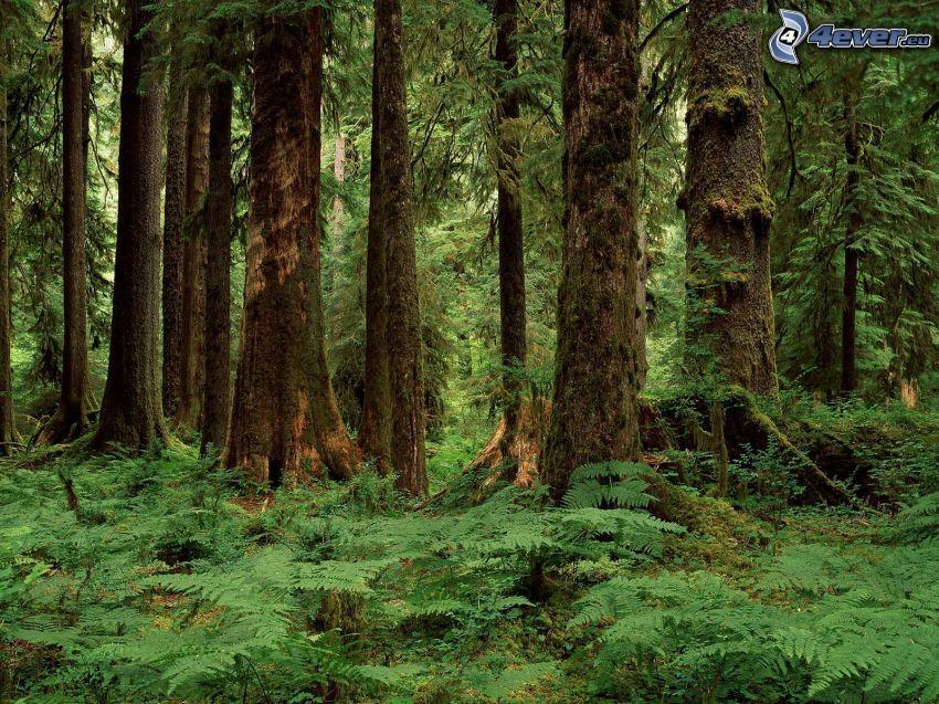 selva, árboles, helechos