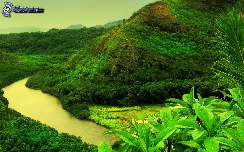 selva, colina, río, verde