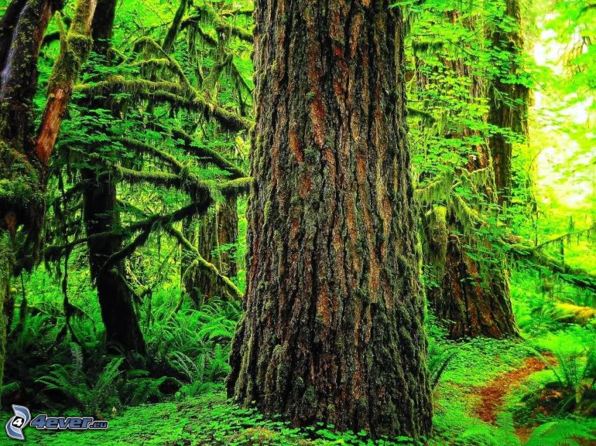 selva, corteza de árbol, verde