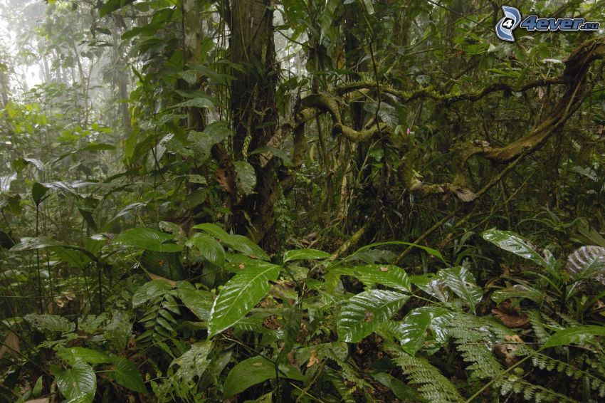 selva tropical, verde