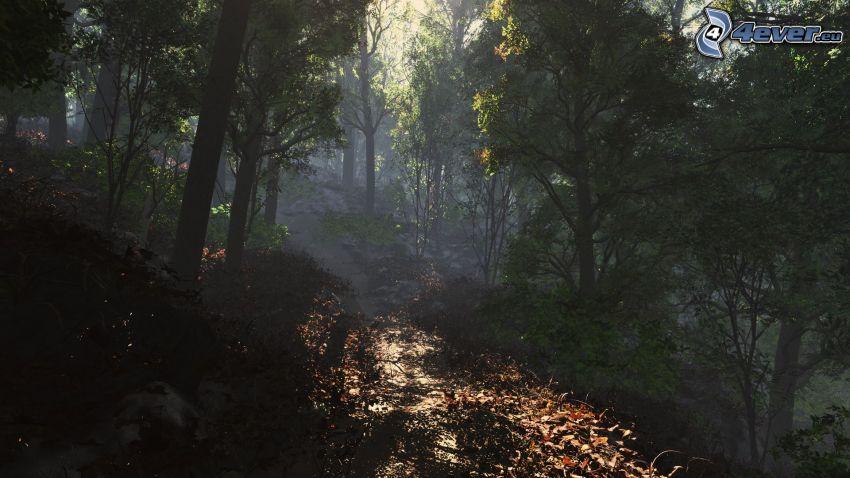 sendero tras un bosque, bosque