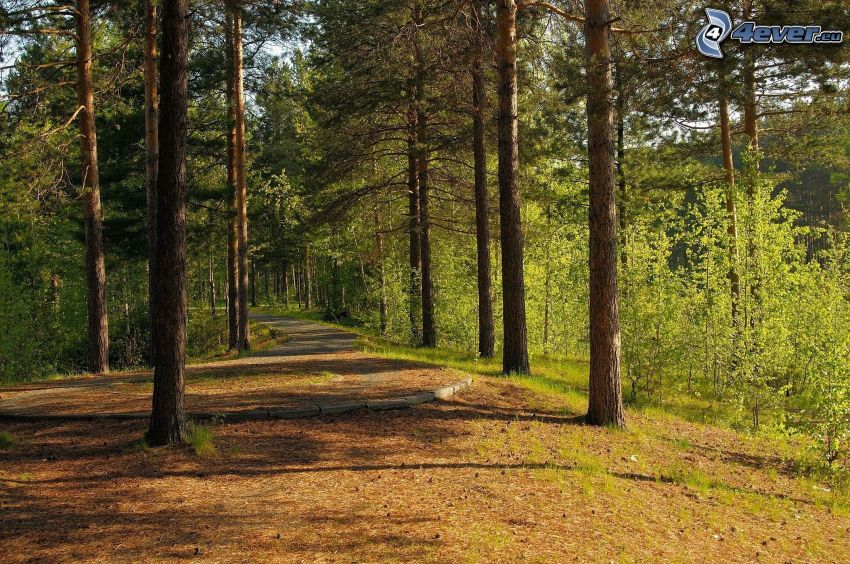 sendero tras un bosque