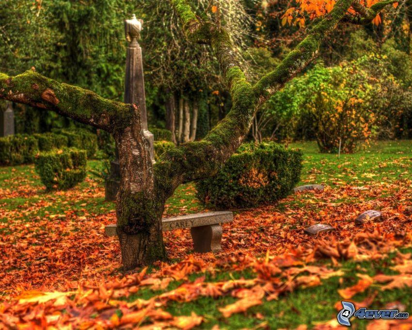 sepulcro, tribu, musgo, hojas caídas