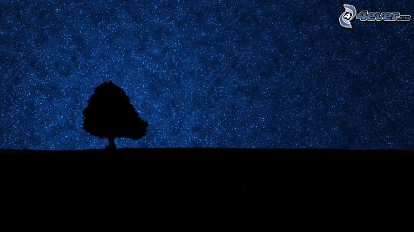 silueta de un árbol, cielo estrellado