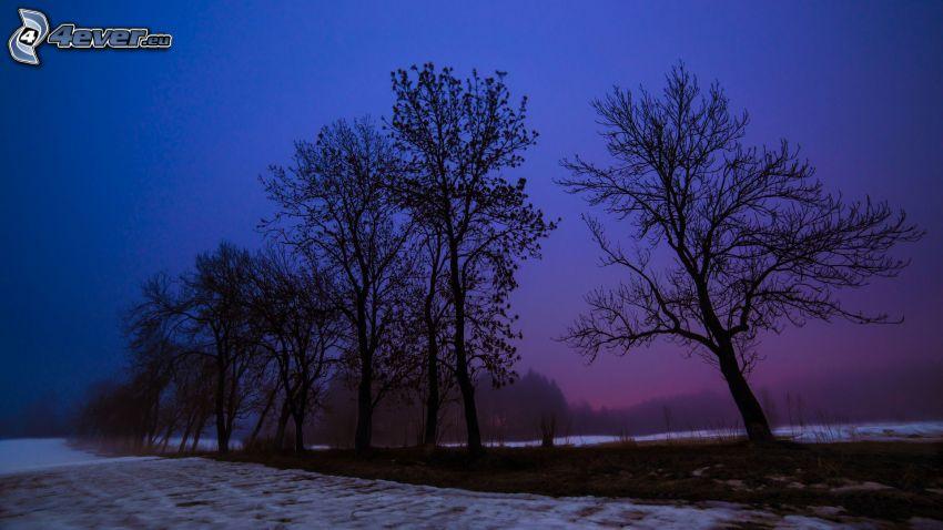 siluetas de los árboles, nieve