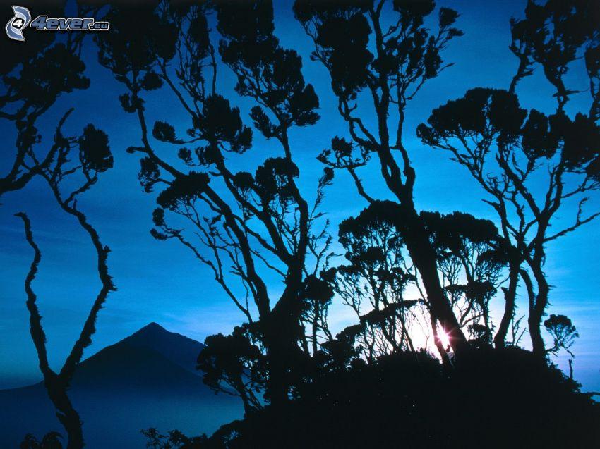 siluetas de los árboles, puesta del sol