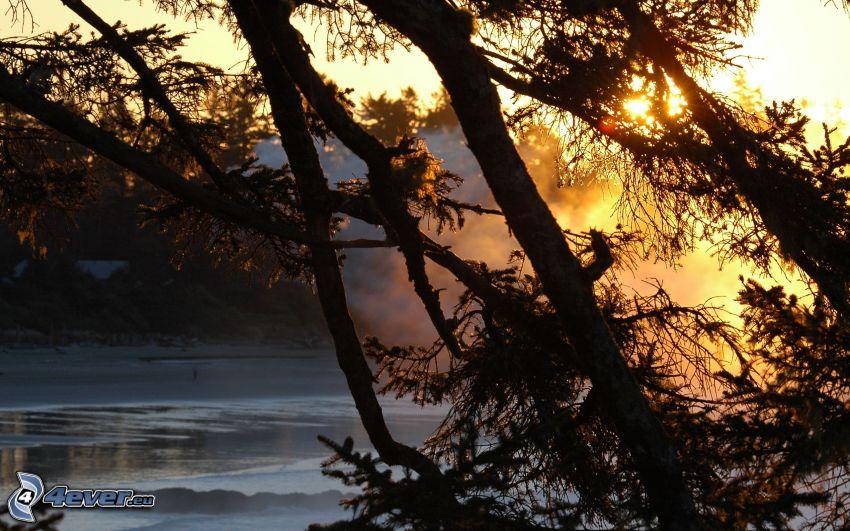 siluetas de los árboles, río congelado, sol