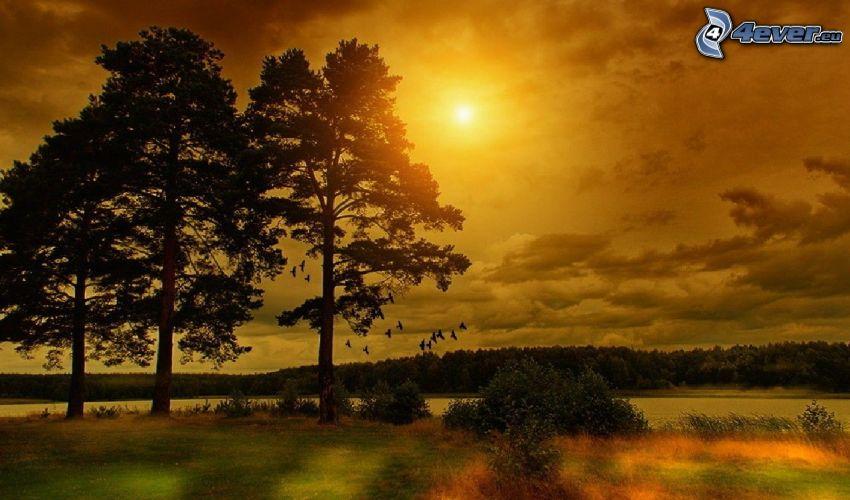 siluetas de los árboles, sol, cielo anaranjado, bosque, río