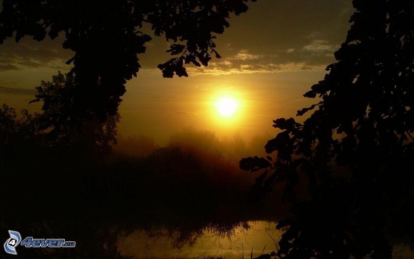 sol, siluetas de los árboles, lago