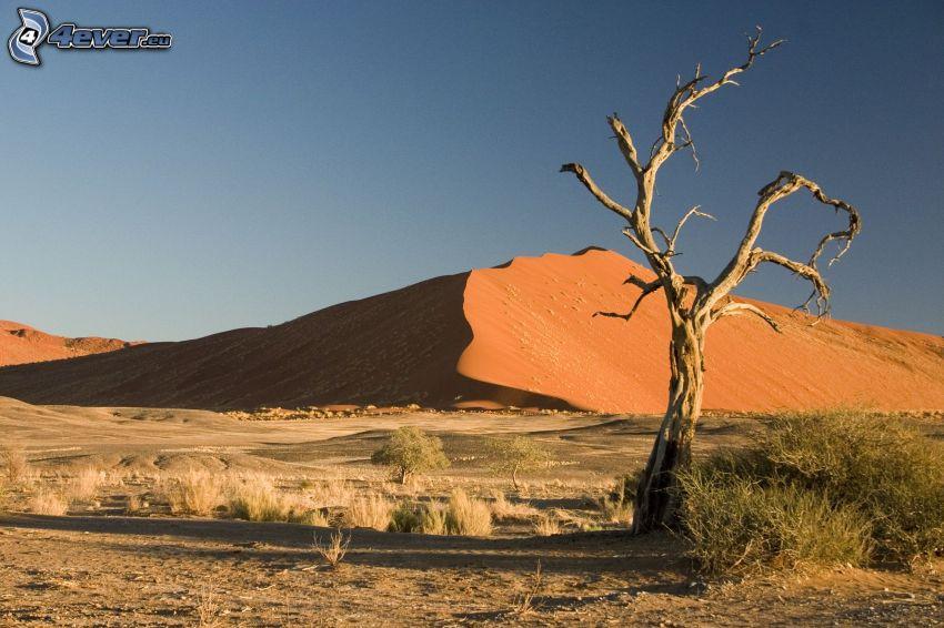 Sossusvlei, árbol seco, duna de arena