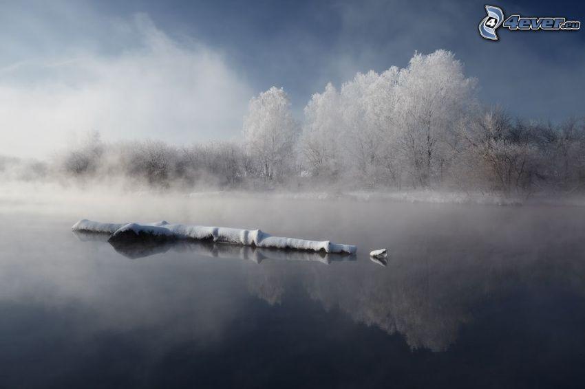 tranquilo lago invernal, madera, árboles nevados, niebla baja
