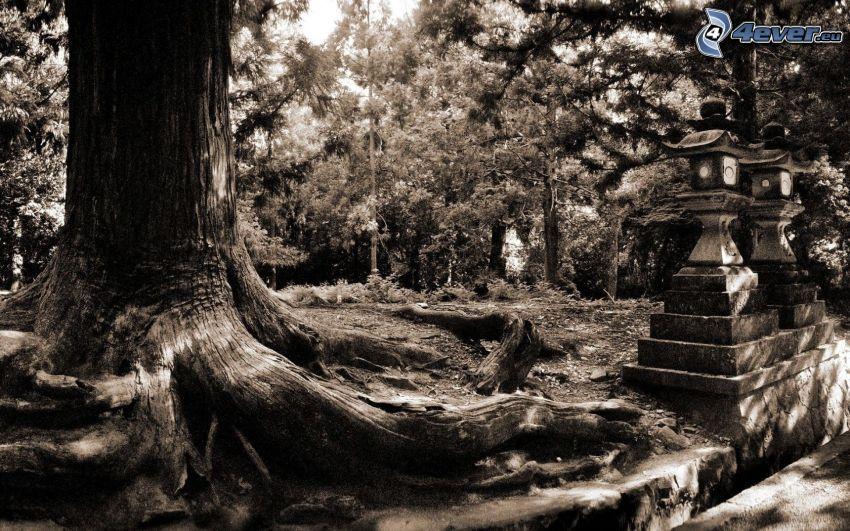 tribu, bosque, Foto en blanco y negro