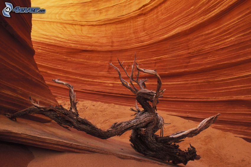 tronco seco, cañón