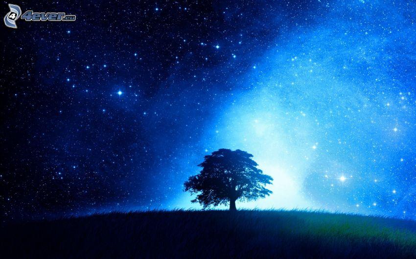 árbol solitario, silueta de un árbol, cielo estrellado, luz intensa