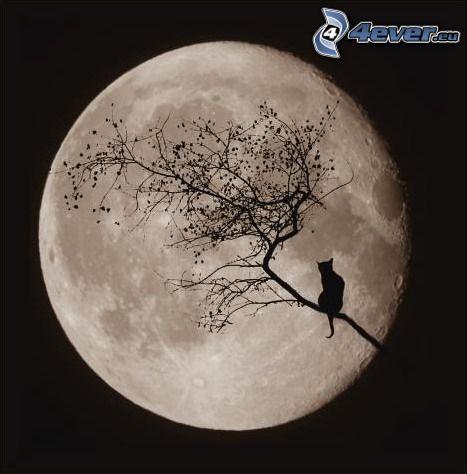 silueta de un gato, Luna, Luna llena, rama