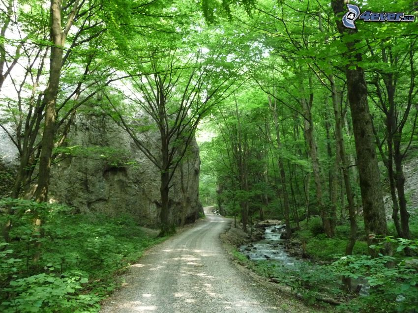 Valle Zádielska, Eslovaquia, camino por el bosque, verde, árboles, corriente