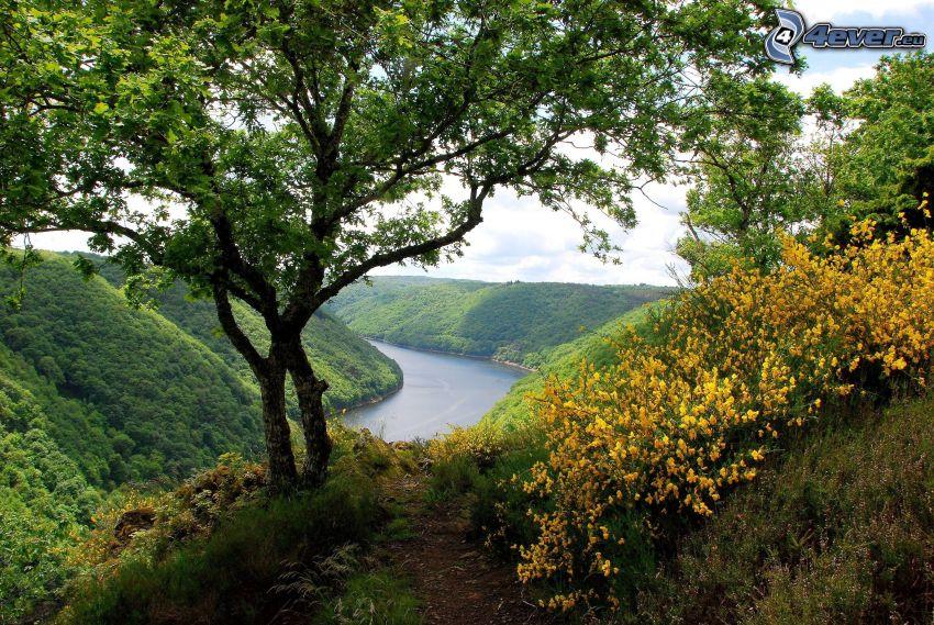 vista, árbol, flores amarillas, río