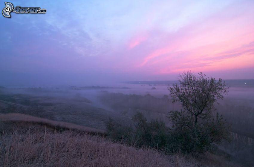 vista del paisaje, después de la puesta del sol, hierba seca, cielo de color rosa