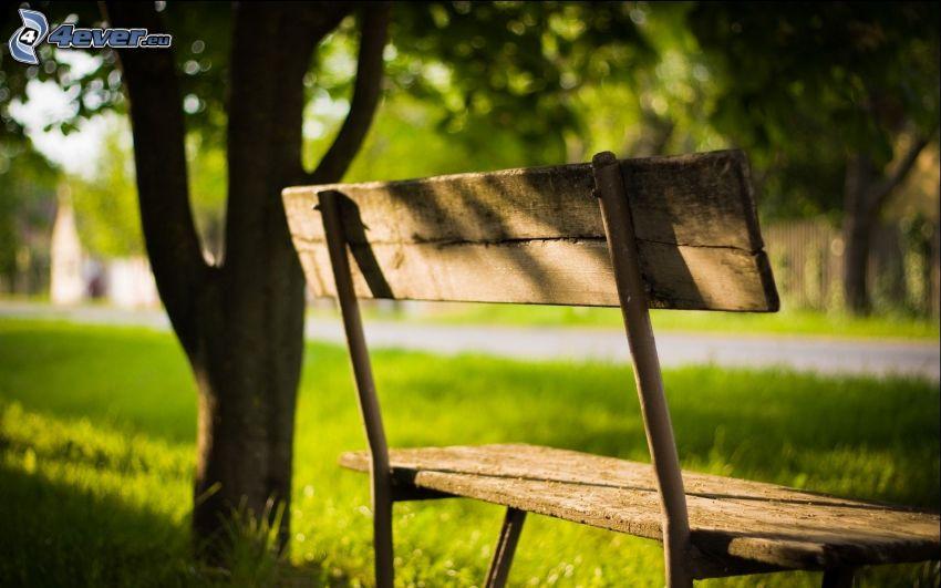 banco bajo un árbol, césped, parque