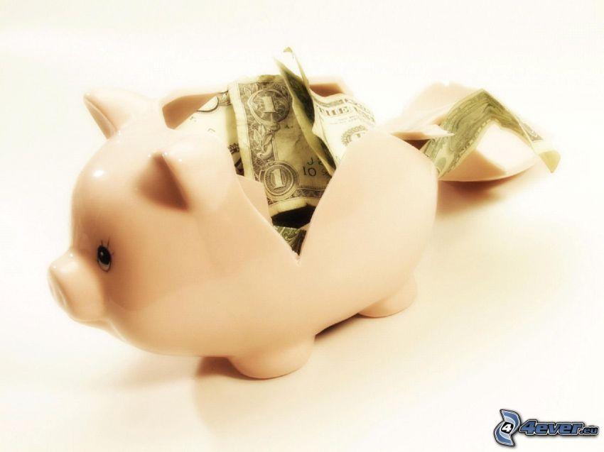 cerdito, dinero, dólares