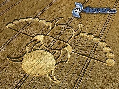 círculos en las cosechas, campo, UFO