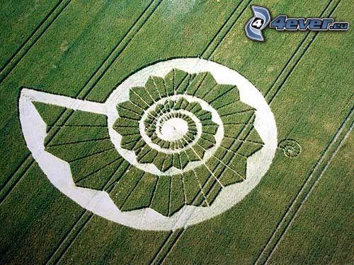 círculos en las cosechas, campo