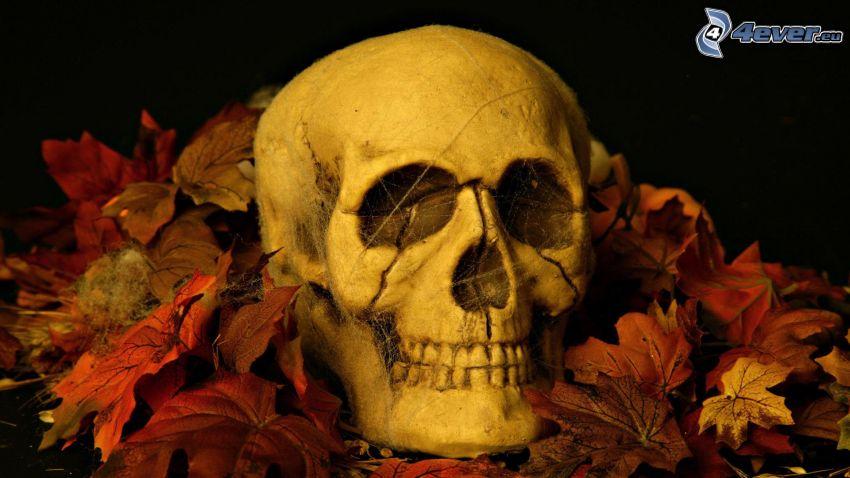 cráneo, hojas rojas, tela de araña
