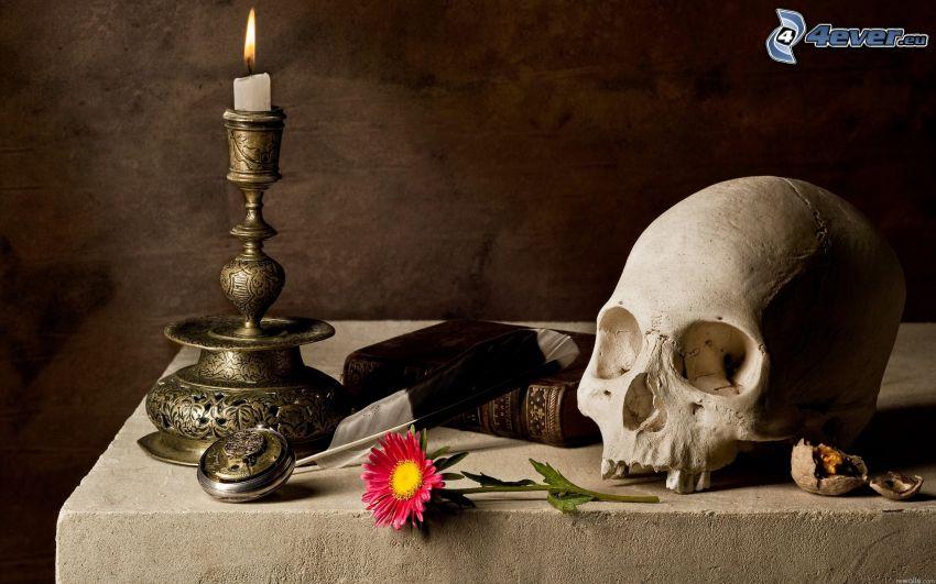 cráneo, libro, flor, candelero, vela