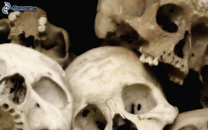 cráneos, esqueletos
