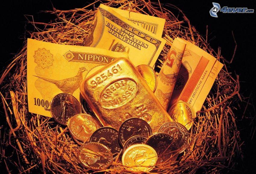 dinero, moneda, billetes, nido