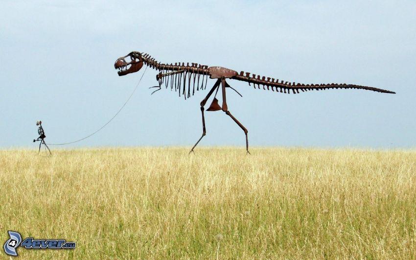 dinosaurio, esqueleto, campo