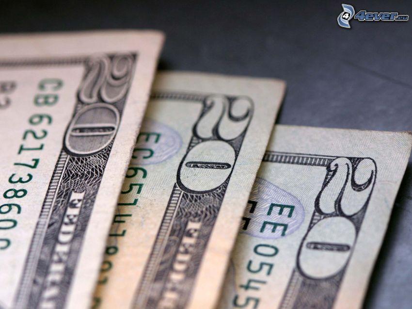 dólares, dinero, billetes
