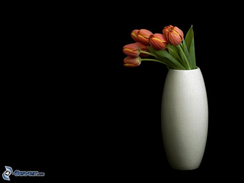 flores en un florero, tulipanes