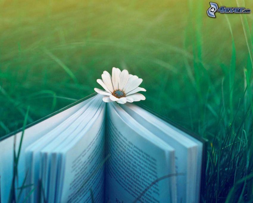 libro, flor, hierba