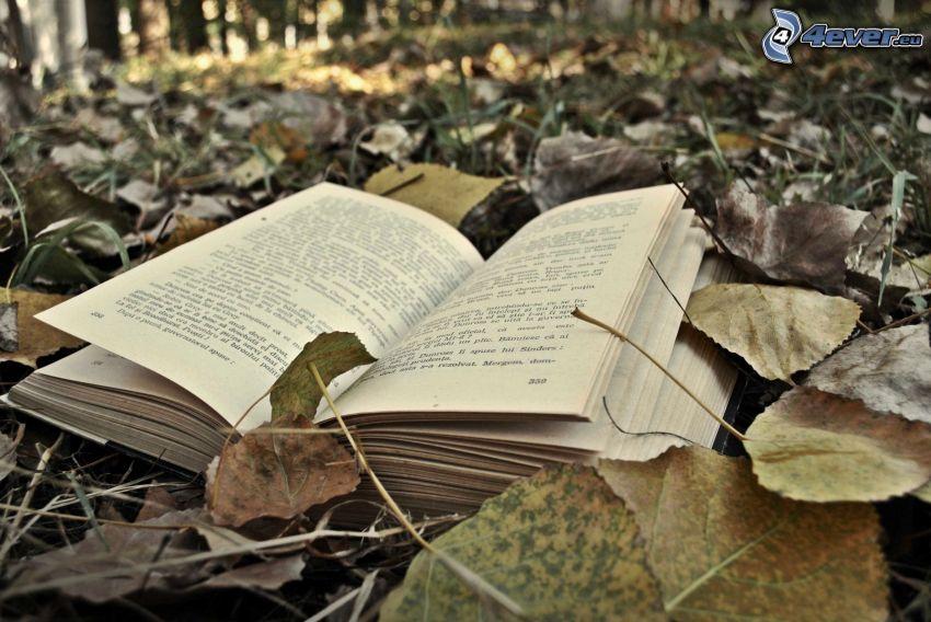 libro, hojas secas