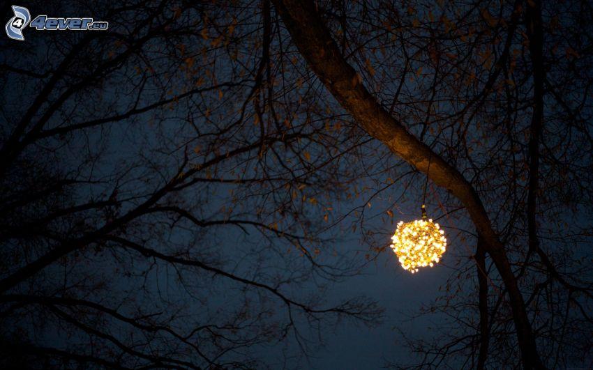 luz, árbol, ramas