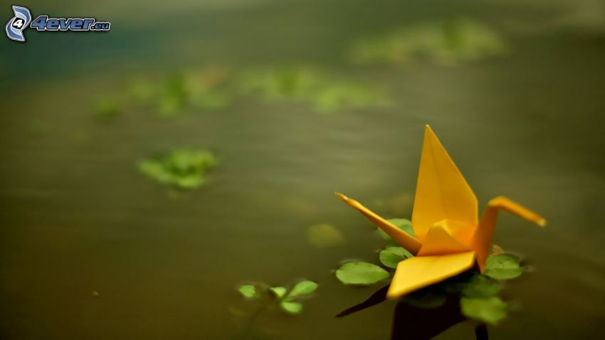 origami, cisne