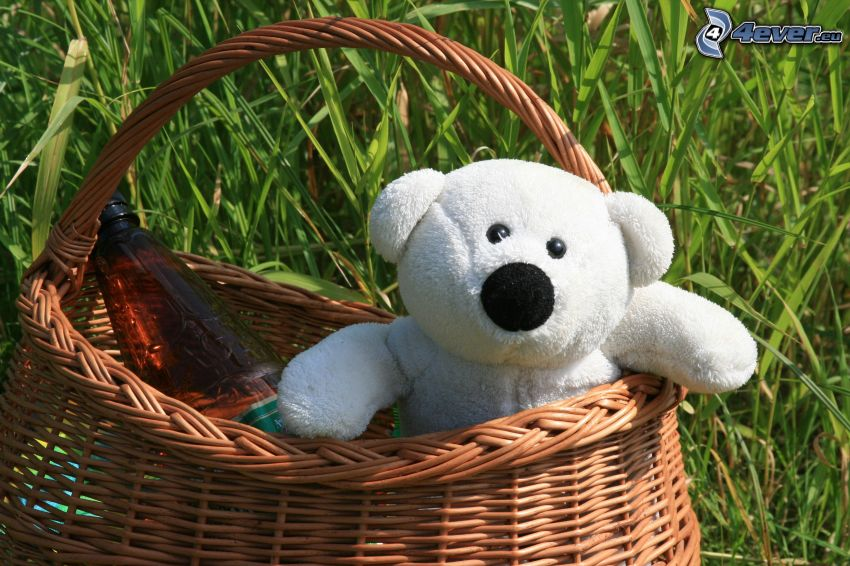oso de peluche, cesta, hierba