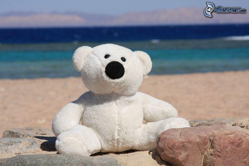 oso de peluche, playa