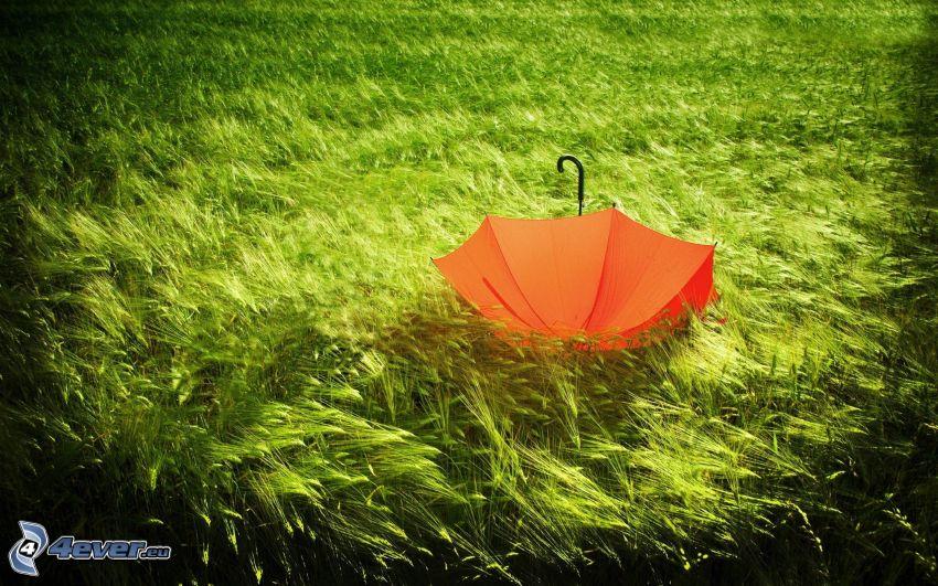 paraguas, hierba