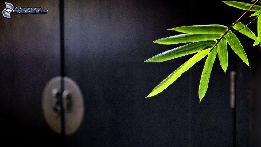 puerta, hojas