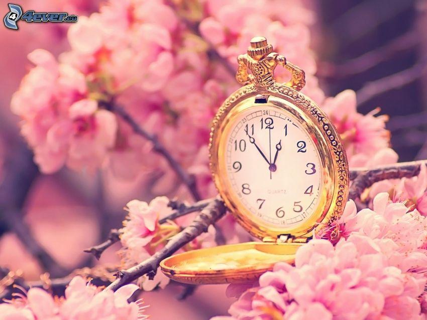 reloj histórico, flores de cerezo, ramita en flor