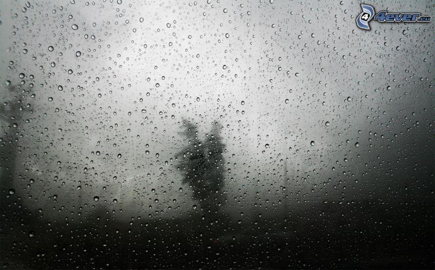 rocío en vidrio, Foto en blanco y negro