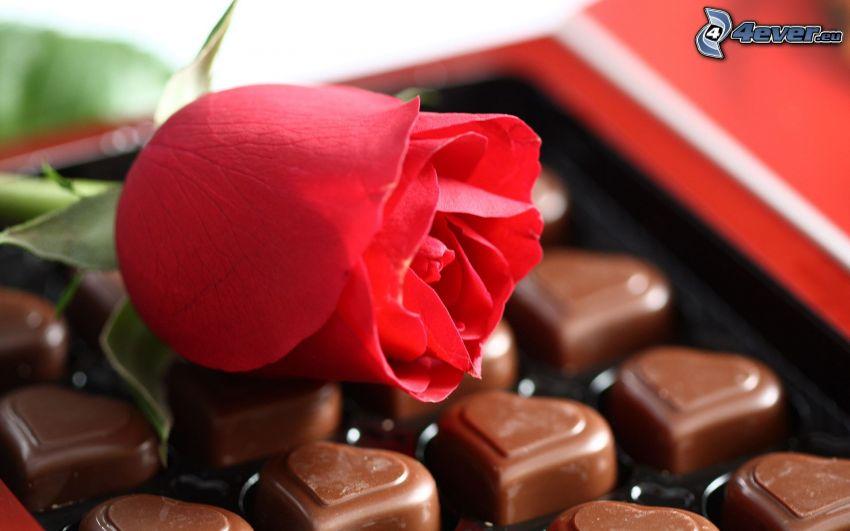 rosa roja, caramelos, corazones