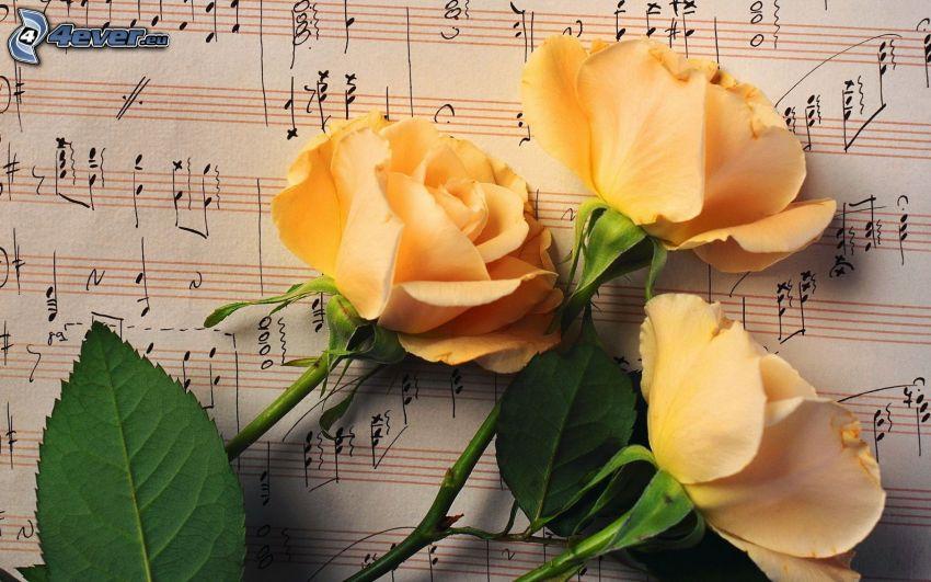 rosas blancas, notas de música
