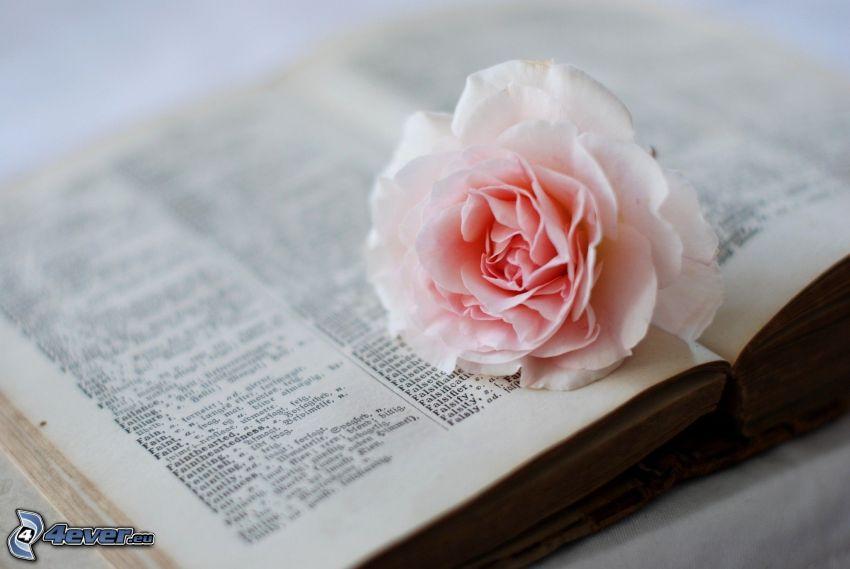 rosas de color rosa, libro antiguo