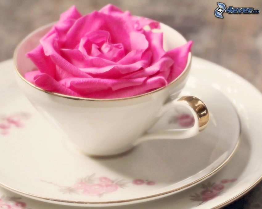 rosas de color rosa, taza